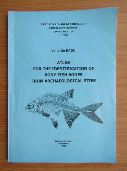 Anticariat: Valentin Radu - Atlas for the identification of bony fish bones from archaeological sites