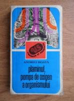 Anticariat: Andrei Roata - Plamanul, pompa de oxigen a organismului