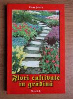 Elena Selaru - Flori cultivate in gradina