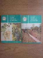 Sarghi Trandafir - Cultura vitei de vie pe spatii mici (2 volume)
