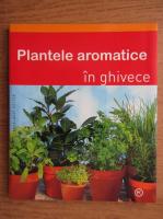 Plante aromate in ghivece
