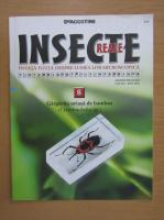 Insecte reale, volumul 8. Gargarita uriasa de bambus
