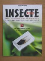 Insecte reale, volumul 9. Cicada neagra tropicala