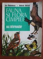 Ion Radulescu - Fauna si flora campiei. Mic determinator